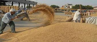 India Grain: Maize up on lean supply, wheat rises on firm demand